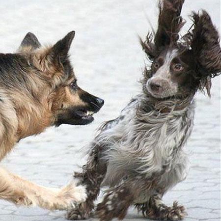Hundepsychologie in Stuttgart für ein angstfreies Hundeleben