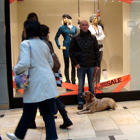Hundeschule in Stuttgart, Grunderziehung für alle Hunde