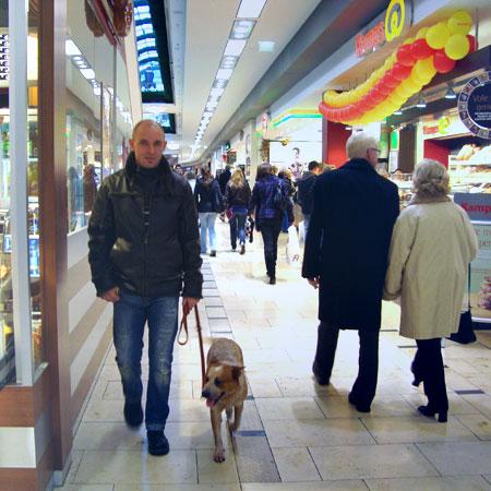 Intensivtraining mit Mensch Partner Hund in Stuttgart