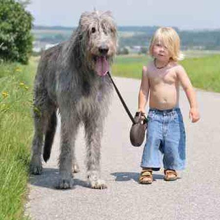 Hundepsychologie in Stuttgart für ein leinenfreundliches Hundeleben
