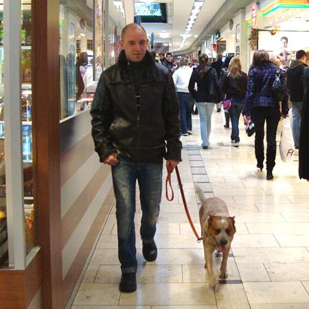 Hundeschule in Stuttgart, Leinenführung in kürzester Zeit