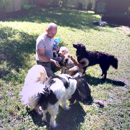 Mensch Partner Hund in Stuttgart Leistungen