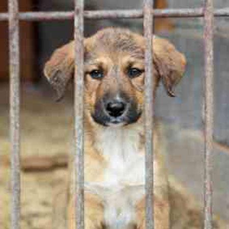 Hundepsychologie in Stuttgart für Hunde aus dem Tierheim